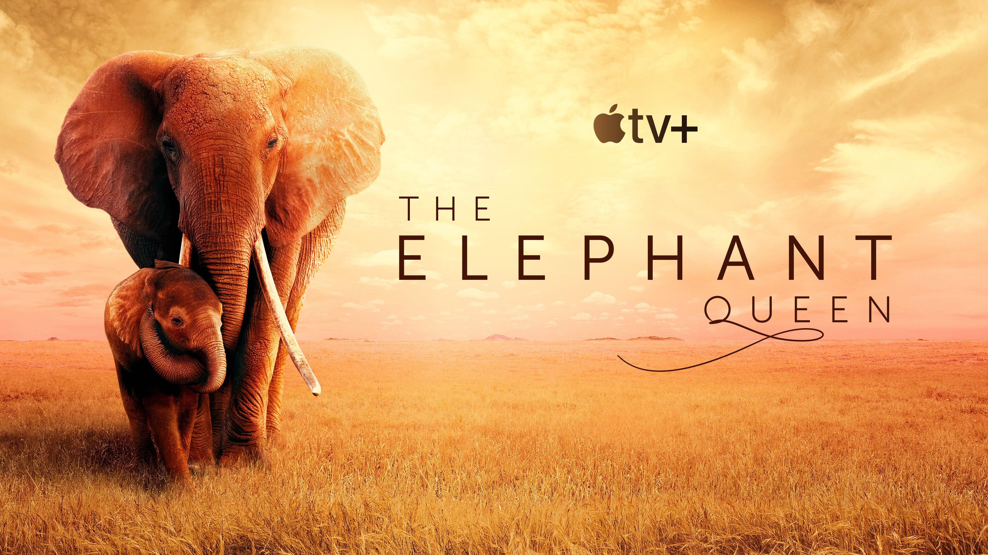 超越滿分的《大象女王》