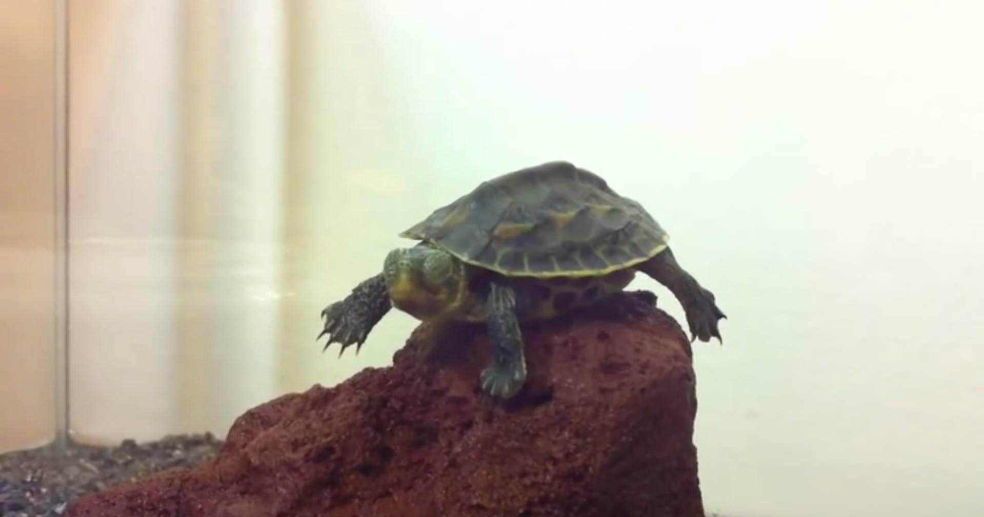 英國研究:烏龜取名「浩克」 睡覺容易叫不醒