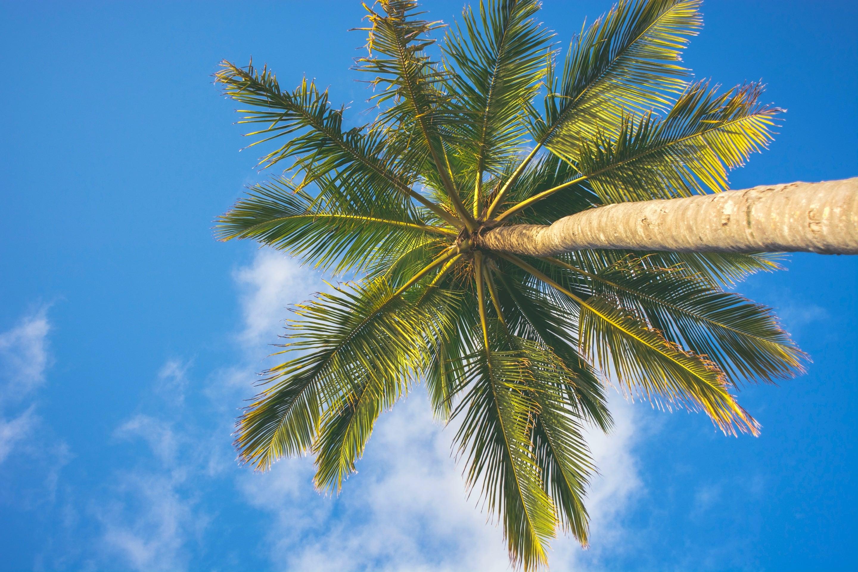 因為失眠,所以穿著真理褲爬上 Coconut Tree